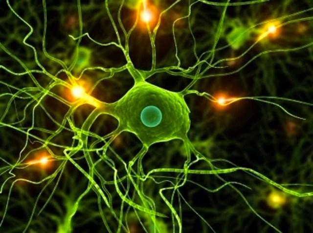 Motor-Neurons